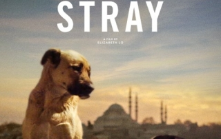 PREVIEW: Stray (18)